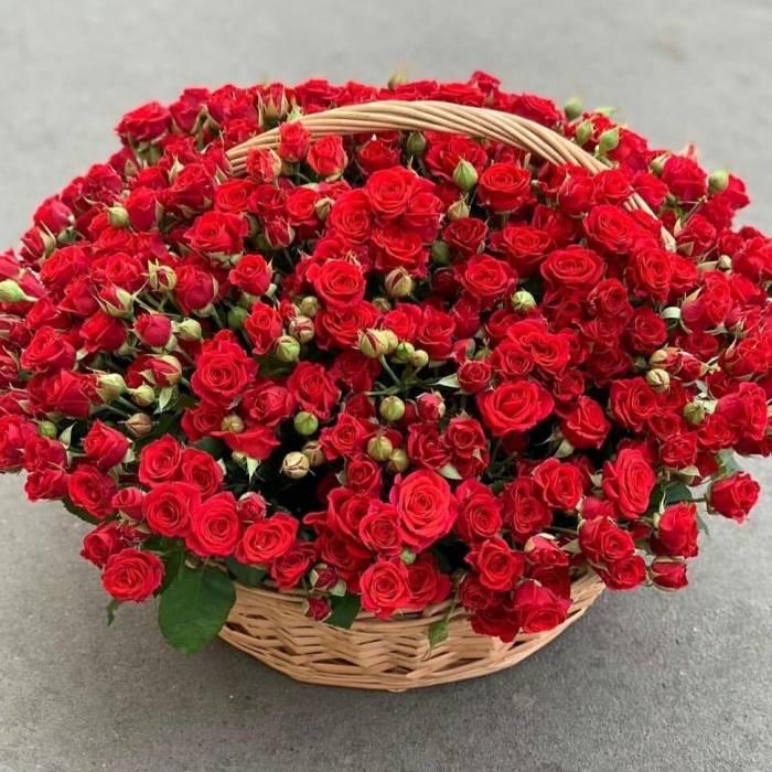 Корзина 101 красная кустовая роза R1951