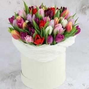 79 тюльпанов микс в коробке R191